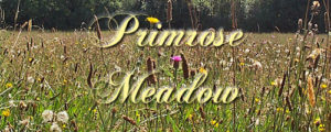 primrose meadow